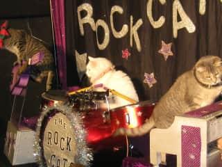Attending a cat circus in San Diego - fun, fun!