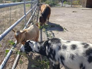 My little farm friends