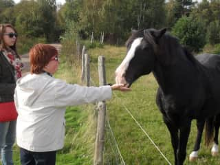 Me with a friends horse