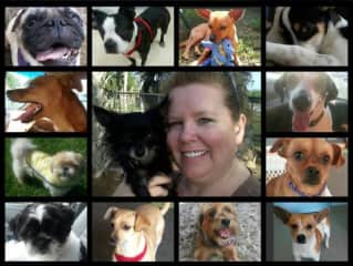 These are just some of the dogs I fostered for my local shelter - they all found homes!