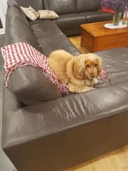 Benson just chilling on couch Nov 2017