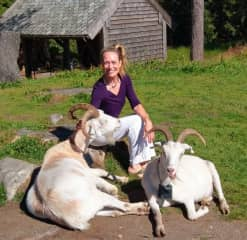 I've never met such friendly goats!