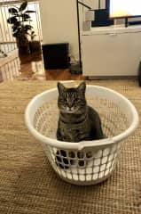Basket, boxes, bags, suitcases... you name it and i've been in it