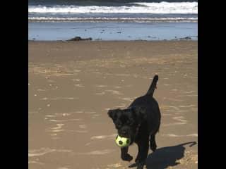 Coco loves the beach