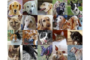 All of our pets - Australia 2016