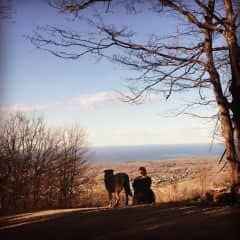 Dog sitting Bodhi and taking a hike in Collingwood
