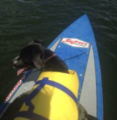 My dog, Ellie on her many fun adventures. She loves hiking & paddle boarding!