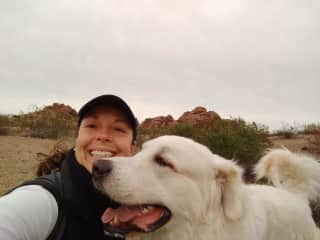 """Custo, aka """"Cous cous"""". A two year old Great Pyr mix who was full of impish fun. He loved getting out on the hiking trails around Phoenix."""