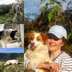 Dogs, cat, goats, chickens ... Azores islands, Portugal. 2018