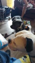 My dog Gaya and her friend Pablo
