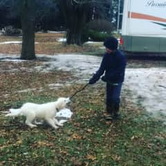 Our 10 year old playing tug with grace, our dog.  She is a Maremma Sheepdog and is now 80 lbs.
