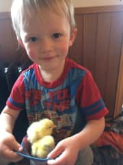 This is Edison, our youngest with a couple chicks.