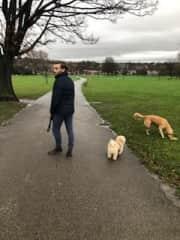 Walking the dogs in London