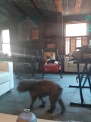 Tika and comfy Echo