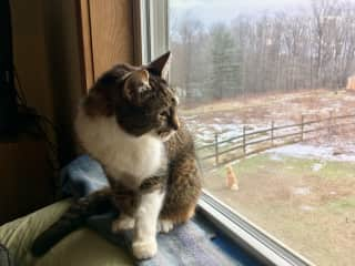 Pet sitting Ella who had medical needs through House Sitters America