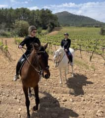 Andalusian horses in Mallorca