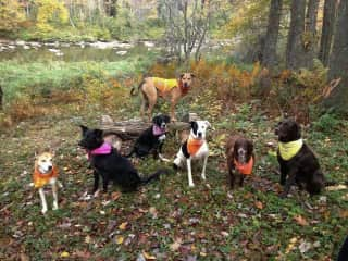 """We operate a pet friendly campground in America.  This was a big """"Thank you"""" photo from some of our guests."""