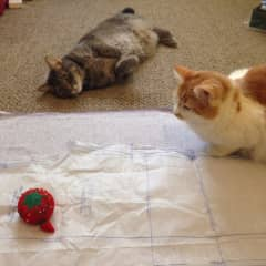 My two pet cats while I was sewing