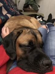 Me and Shifter (Dogsitting my neighbor's sweet--and sleepy--Mastiff).