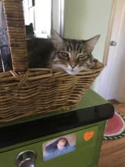 """This is """"Peeps""""  she is an adorable originally feral cat that we housesat for.  She loved to sleep in containers."""