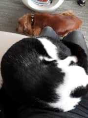 Resting time with Ti-Matou and Bambou, two friends I take care of regularly in France, close to the Swiss border
