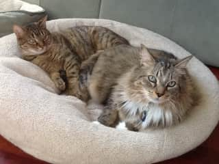 Lulu and Beany