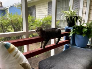 She is an indoor only cat, but she does like to watch the birds on the screened in porch.