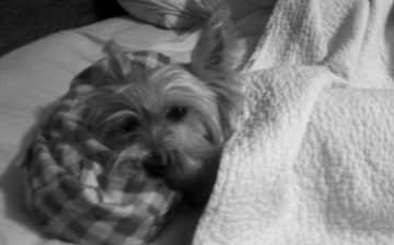 Rocco relaxing.