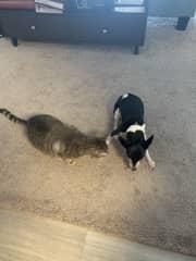 My dog Oreo and my roommates cat Winston!