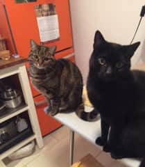 The two darlings Sophie and Frankie in Berlin Germany.  I so miss them! 18 Dec 2017 - Jan 2018