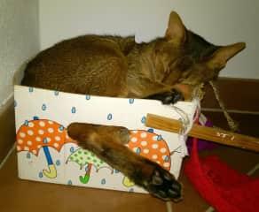 Kasimir found a new sleeping place