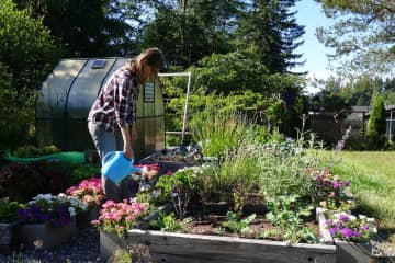 Amandine taking care of the garden in Port Angeles, WA, USA