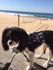Polly loves the beach