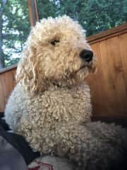 Nuggett at the cottage