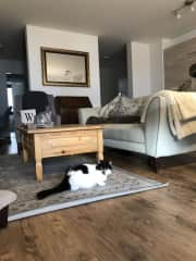 Margot in the living room
