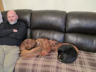 Matthew and the doxies - January 2019