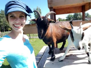 I wasn't kidding about the goats! haha This is Adam and Rosie. They are super playful. Rosie is a little more shy and Adam loves getting back rubs haha