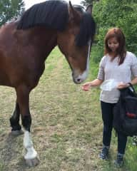 Saying hello to my friend's horse Tydde.