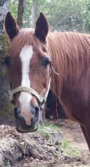 26 yr. old mare that I cared for.  Her owners take such good care of her
