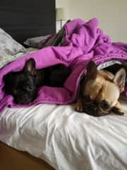 Freya and Arya in bed