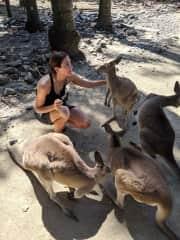 Wildlife Sanctuary in Australia