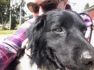 Me and Sirius, ship's dog from the Bark Europa out of The Netherlands. She was visiting Lunenburg, NS for Tallships festival.