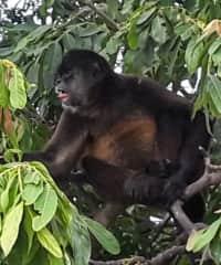 Hobbies include nature photography- Howler monkey Nicaragua