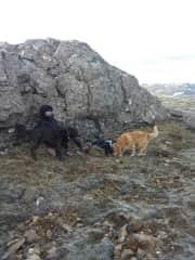 Hiking with Kolur and Loppa.
