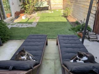 Cats in their kingdom