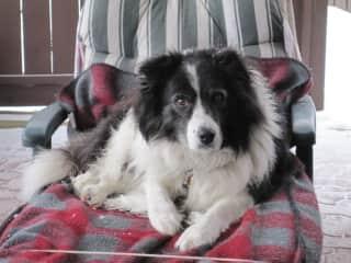 Jed, Bruce Aikenhead's dog