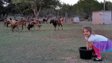 My granddaughter feeding the sheep.