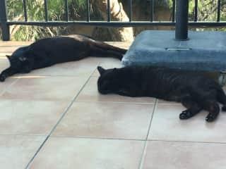 Sultan and Mitzi - siesta!