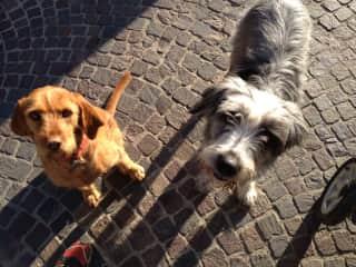 Rucola and Barolo