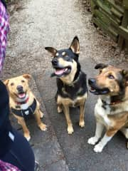 Best buddies; Jack, Bobby and Cedar
